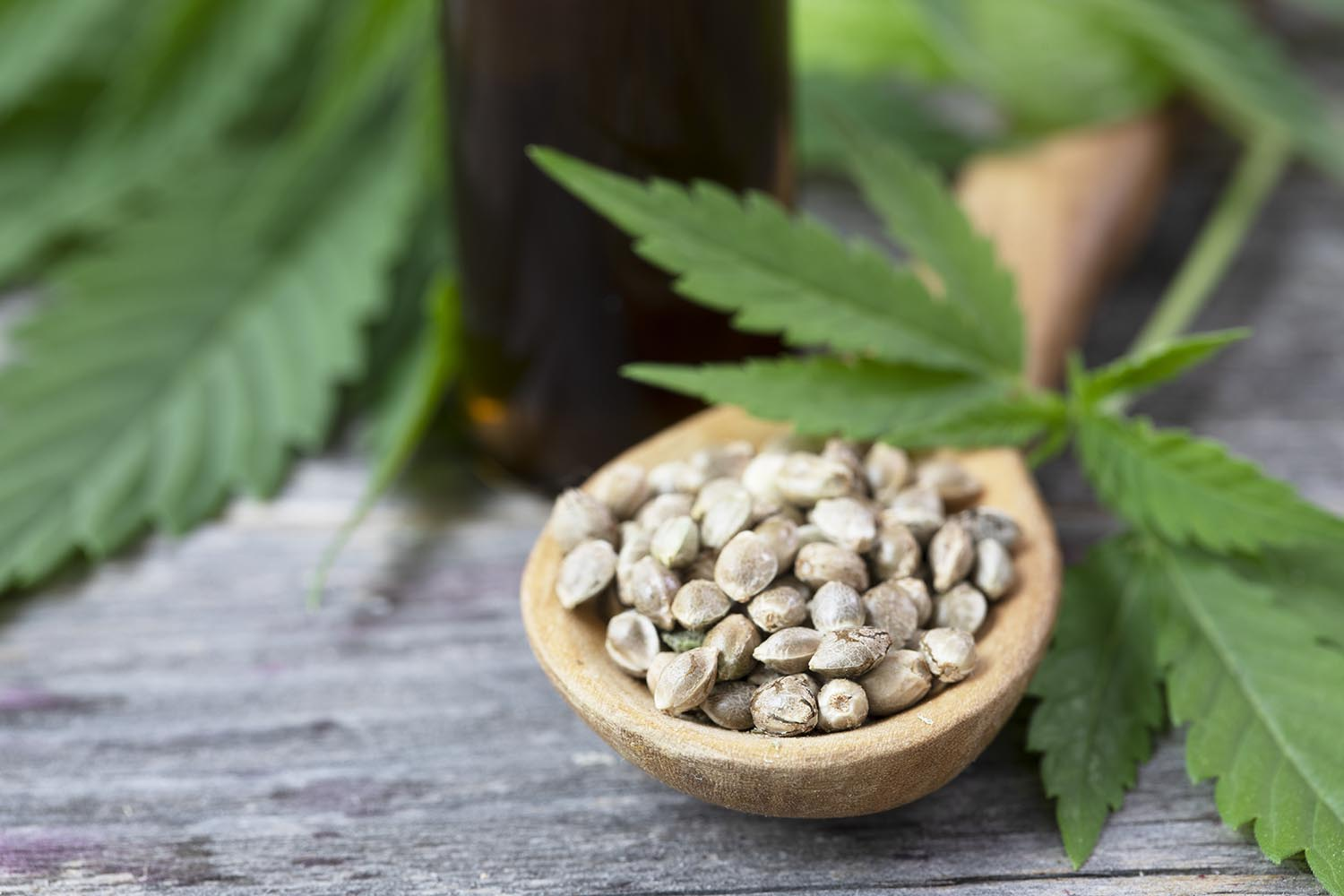cannabis-seeds-in-spoon